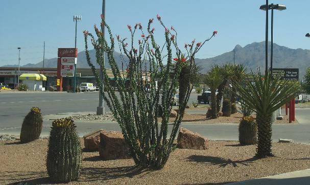 Landscaping Gravel El Paso Tx : El paso landscaping