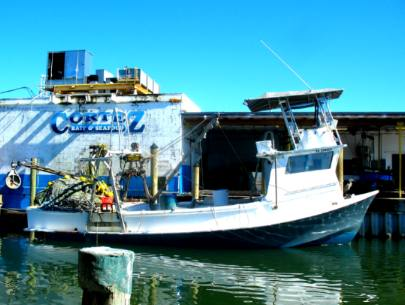 Purse seine boat cortez for Commercial fishing florida