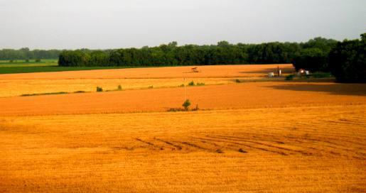 Beautiful Kansas Pictures Beautiful Kansas Wheat Field