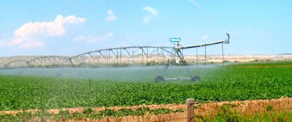 Pivot Irrigation On Sugar Beet Field In Wheatland Wyoming