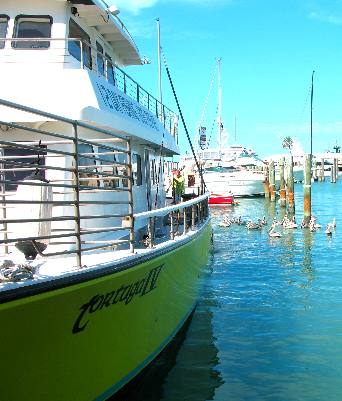 Tortuga iv party fishing boat out of key west for Party boat fishing florida